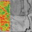 Sample Yield Map Report